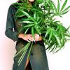 Niko Iordanovs Sunrise-Hanf-Pflanze von Cem Özdemir im Video der Ice Bucket Challenge