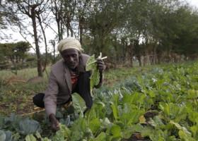 Ernährungssicherheit, Bildung, Bekämpfung von Fluchtursachen