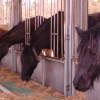 Rechtsanwalt Lars Jessen informiert: Haftung für Pferdefutter