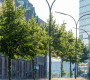 Sitzung des Klimakabinetts: Der Bund deutscher Baumschulen fordert die Aufpflanzung von Bäumen in Stadt und freier Natur (FOTO)