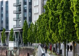 Große Bäume braucht die Stadt! Nachpflanzungen im urbanen Raum (FOTO)