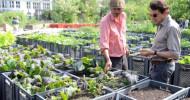 Landwirtschaft inmitten der Großstadt / Schauspieler Hans-Werner Meyer besucht Prinzessinnengarten in Berlin-Kreuzberg / Projekt für Karl Kübel Preis nominiert (mit Bild)