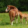 Zum Schutz vor Schadensersatzforderungen ist die Pferdehaftpflicht die beste Wahl