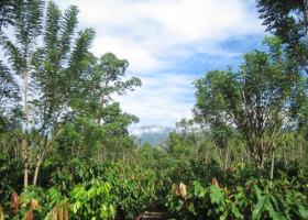 Greening the Cocoa Industry macht großen Sprung  nach vorn