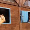 www.mit-Pferden-reisen informiert: Reiserecht